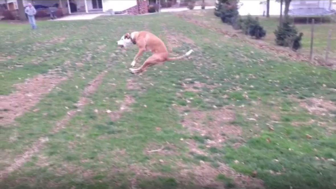 Flying Bruiser – Good Dog – From January 2013